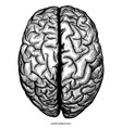 human cerebrum top view hand draw engraving vector image vector image