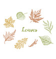 leaves set flower and medicinal herb rustic vector image vector image