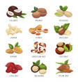 nut grains icon set healthy vegan snack vector image
