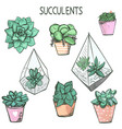 set cute hand drawn succulent plants in pots vector image vector image