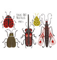 set folk art decorated beetles vector image