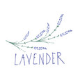 lavender flower logo design text hand drawn vector image vector image