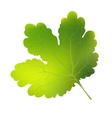 currant leaf EPS10 vector image