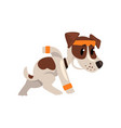 cute funny jack russell terrier athlete character vector image vector image