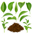 realistic tea leaves set vector image