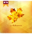 Autumn pattern with leaf EPS 10 vector image