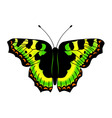 butterfly made in EPS 10 vector image