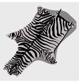 Skin rug Zebra cartoon style vector image