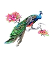 Watercolor drawing peacock on blooming tree branch vector image vector image