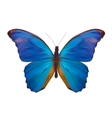 Blue Butterfly Isolated on White Realistic vector image vector image