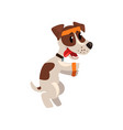 cute jack russell terrier athlete character doing vector image vector image