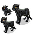 maturation stages black panther vector image
