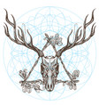 sketch of deer skull in triangular vintage frame vector image vector image
