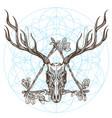 sketch of deer skull in triangular vintage frame vector image