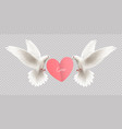 white pigeons holding heart vector image vector image