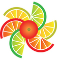 citrus fruit slices vector image vector image