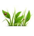 Green grass plantain and ladybugs isolated on vector image