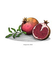 pomegranate hand drawing vintage clip art vector image vector image