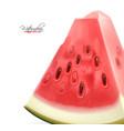 realistic watermelon fruit 3d slice vector image vector image