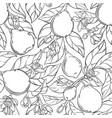 bergamot seamless pattern vector image