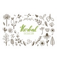 herbal tea and floral doodle set vector image vector image