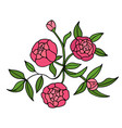 peony flower graphic color isolated sketch bouquet vector image