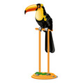 beautiful bird toucan sitting on a wooden perch vector image vector image
