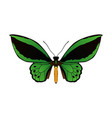 beautiful butterfly silhouette vector image vector image