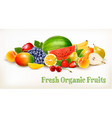 big collection of different fresh fruit vector image