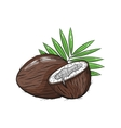 coconut on white background vector image vector image