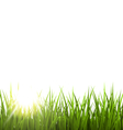 Green grass lawn with sunrise on white Floral vector image vector image