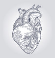 hand drawn human heart engraved vector image