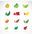 set of color autumn fallen leaves on white vector image vector image
