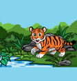 young tiger in jungle vector image vector image