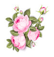 blooming rose vector image vector image