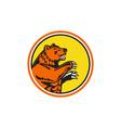 california grizzly bear side circle retro vector image vector image