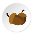 two acorn icon circle vector image vector image