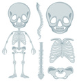 Human skeleton for young kid vector image vector image