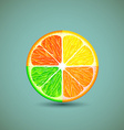 Icon citrus fruits vector image vector image