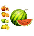 ripe striped watermelon realistic juicy fruits vector image vector image