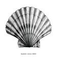 seashell vintage clip art vector image
