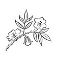stylized branch wild rose floral ornament vector image vector image