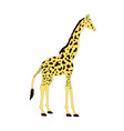 isolated giraffe animal cartoon vector image vector image