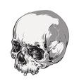 skull vector art vector image vector image