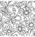 calendula seamless pattern vector image