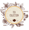 tea shop template with hand drawn elements vector image
