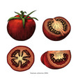 tomatoes hand draw vintage clip art isolated on vector image