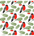 bullfinch and rowan berries pattern vector image vector image
