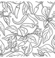 cayenne pepper seamless pattern vector image