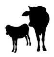 cow and calf vector image vector image